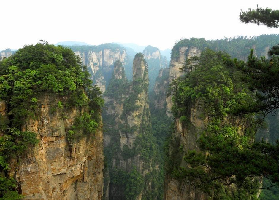 空山国家森林公园动物
