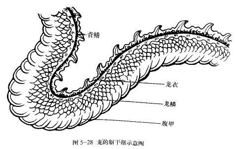 神了!龙的画法以及身体各部分结构分析,绝对干货!