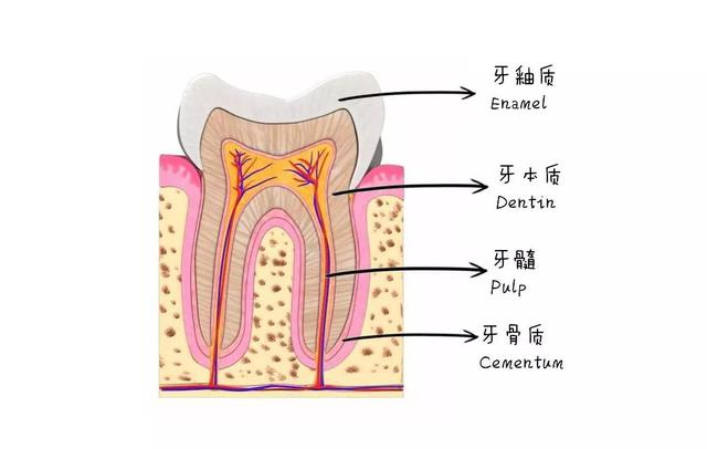 洗牙是一种牙周保健手段,并不会对你的牙齿造成损伤,它对你的口腔起到预防性的保护,但过于频繁的洗牙也是会对牙齿造成伤害的,一般我们建议每半年或一年洗一次。 洗牙并不能美白牙齿,它只是还原牙齿本来的样子而已。根据科学研究表明,最坚固的牙齿是自然健康略带黄色的牙齿。看上去并不会呢么显白,更不会像纸张或者钢琴键一样白的颜色,而是应该再暗两个色调。当然如果你长期吸烟,那你的牙齿颜色会再深一点。  像上面这种淡淡的黄才是正常的啊各位,如果是比这黄的多肯定就是有原因的了! 牙齿之所以呈淡黄色是因为牙齿外层