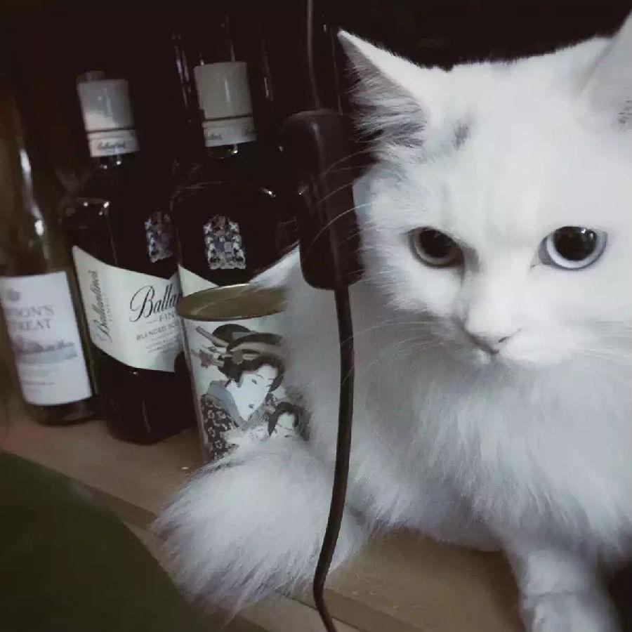 如果世界上有一种教我会加入,一定是拜猫教!图片