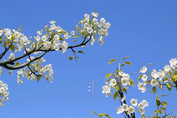 """四月自然是踏青赏花的好时节。前些天遇到几位摄影朋友,他们说:4月份可不能在家里呆着呀。是呀,经过一个冬季的蛰伏,好摄之徒们怎么能错过春意盎然的花花世界呢,身边的摄友们纷纷下江南、上秦岭,只为追逐花儿的身影。 [[img src=""""http://simg.sinajs.cn/blog7style/images/common/sg_trans."""