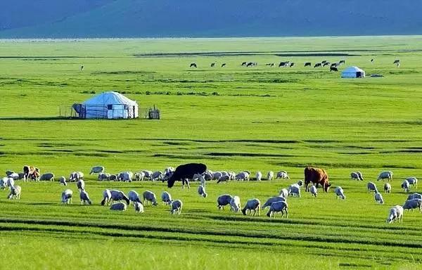 这里有草原、云海、蒙古包、成群的牛羊
