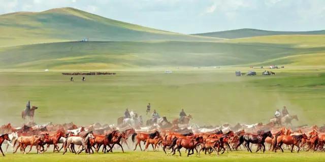 """這里是我國目前保存最完好的草原,水草豐美,總面積一億四千九百萬畝,是美得跟電腦桌面一般的""""牧草王國""""。"""