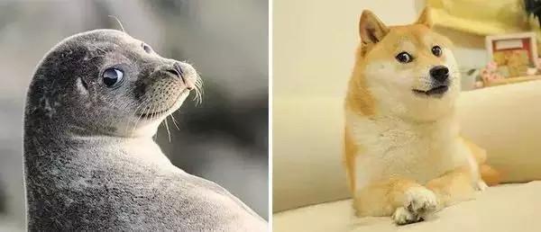 瞅你咋滴想嘎啥~ 海豹简介  海豹是海洋动物,属于哺乳动物(胎生).