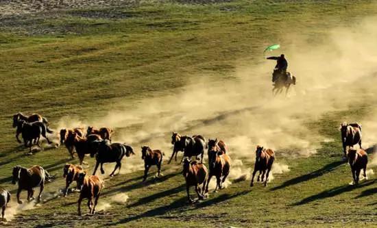 300多年過去了,昔日金戈鐵馬的古戰場,現在變成了令人向往的旅游勝地,這里是離北京最近、最美麗的大草原!