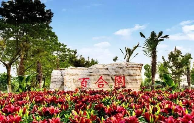   连云港 东海县西双湖风景区 百合园 5月  西双湖景区位于