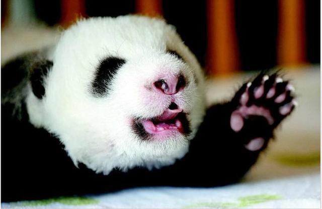 奇闻科普 | 盘点世界上最萌的13种动物!