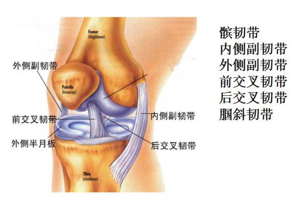 67半月板损伤,髌骨软化,膝关节炎,滑膜炎等不是你膝盖疼痛的罪魁祸