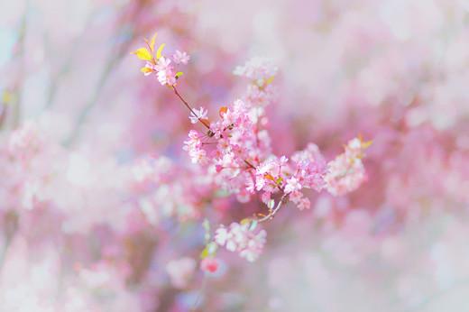 看这些赞美春天的诗句 满园春色关不住..